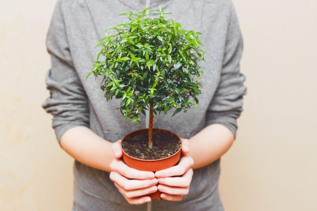Hands holding green tree in pot